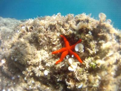 stella-marina-port-cros